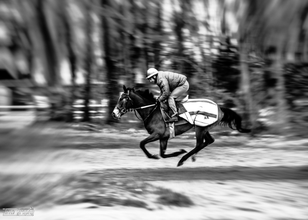 photo cheval chantilly