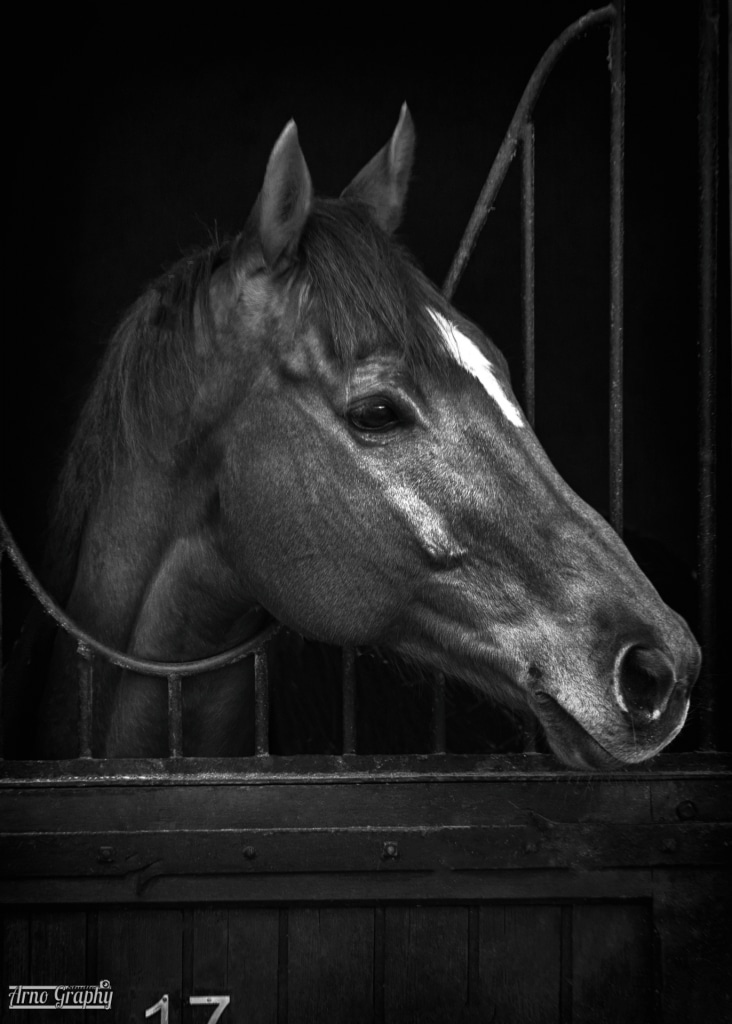 portrait cheval chantilly
